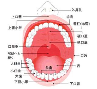 口腔の構造